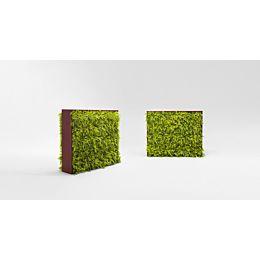 Greenery parete vegetale